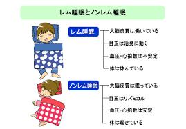 レム睡眠 ノンレム睡眠について説明した図