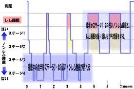 前半はノンレム睡眠が多く 特に深い眠りの徐波睡眠の比率が高いことを示す図