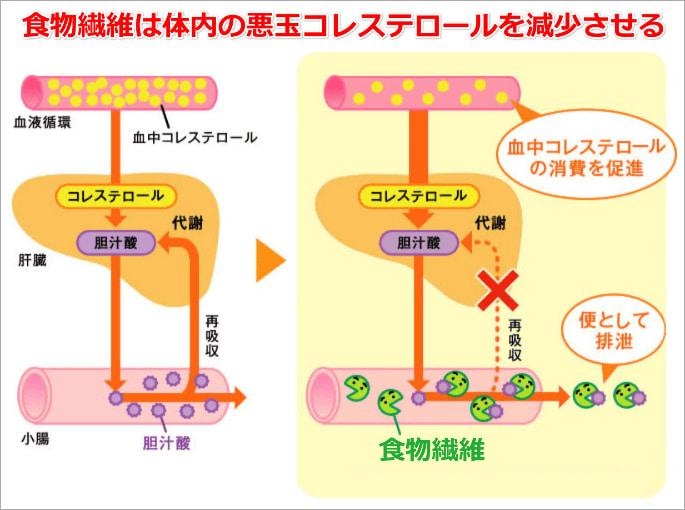 食物繊維がコレステロール値を下げることを示す図