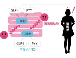 短鎖脂肪酸は大腸での生理活性物質の産生を亢進することを示した図