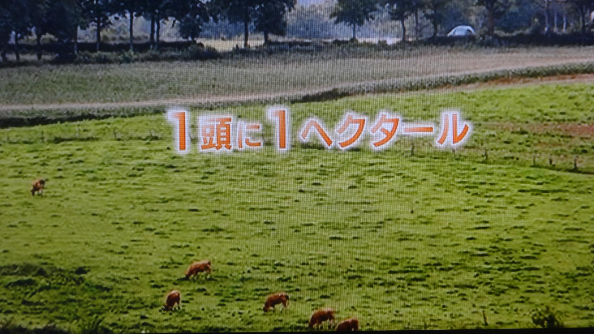 1頭に1ヘクタールの恵まれた飼育環境の写真