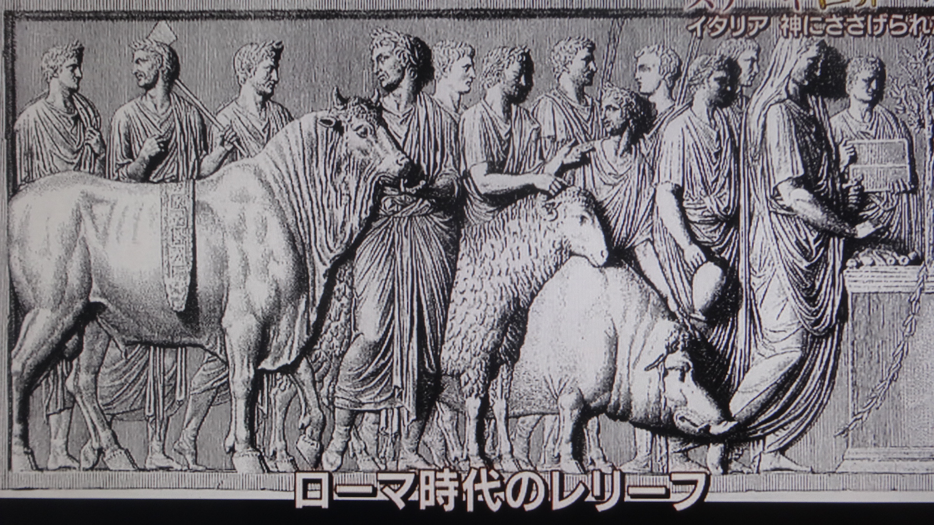 ローマ時代のレリーフに描かれたキアニーナ牛
