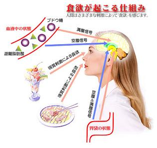 視床下部の食欲中枢に入力されるさまざまな種類の情報
