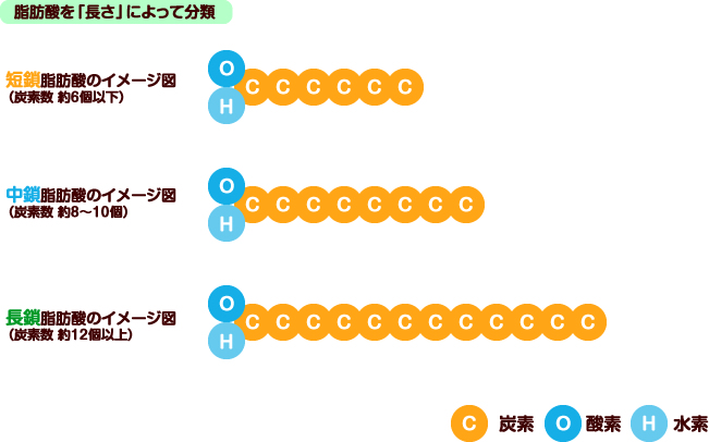 脂肪酸を長さ=炭素の数で分類した図