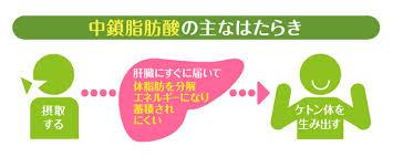 中鎖脂肪酸の働き