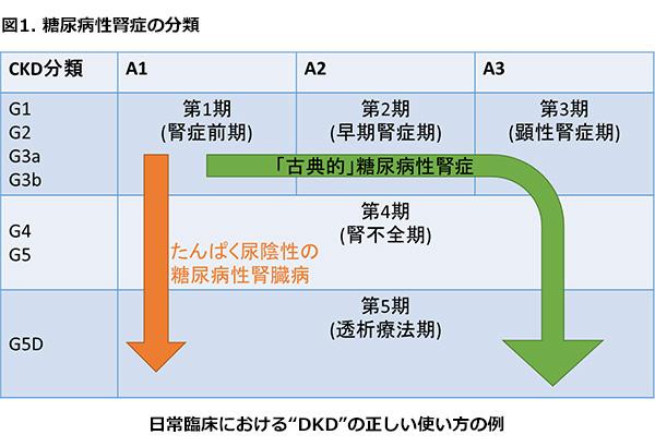 尿タンパク陰性でも 腎機能低下が進行する糖尿病患者さんについて説明する図