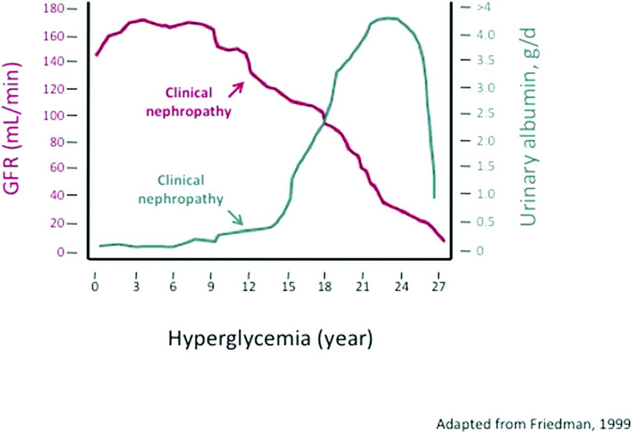 より早期からタンパク尿とともにeGFRによる腎機能のフォローを欠かさないことが重要であることを示した図