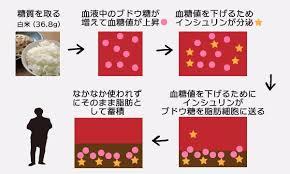 過剰な糖質が脂肪に変換され蓄積することを示す図