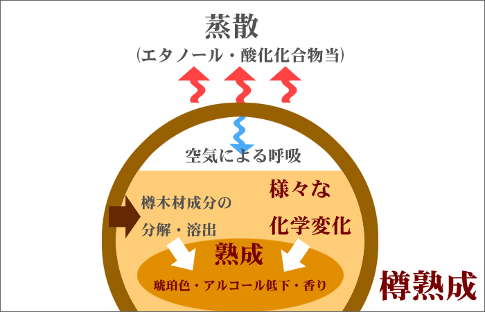 熟成樽のなかで起きている変化についてまとめた図