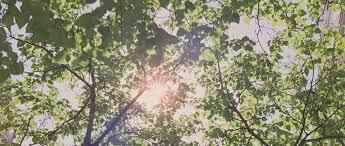 トゥー・ザ・ワンダーで描かれた 美しい木漏れ日