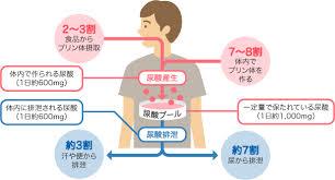 尿酸の体内動態