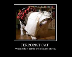 テロリストキャット