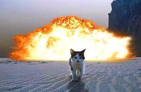 テロリストに変身するネコ