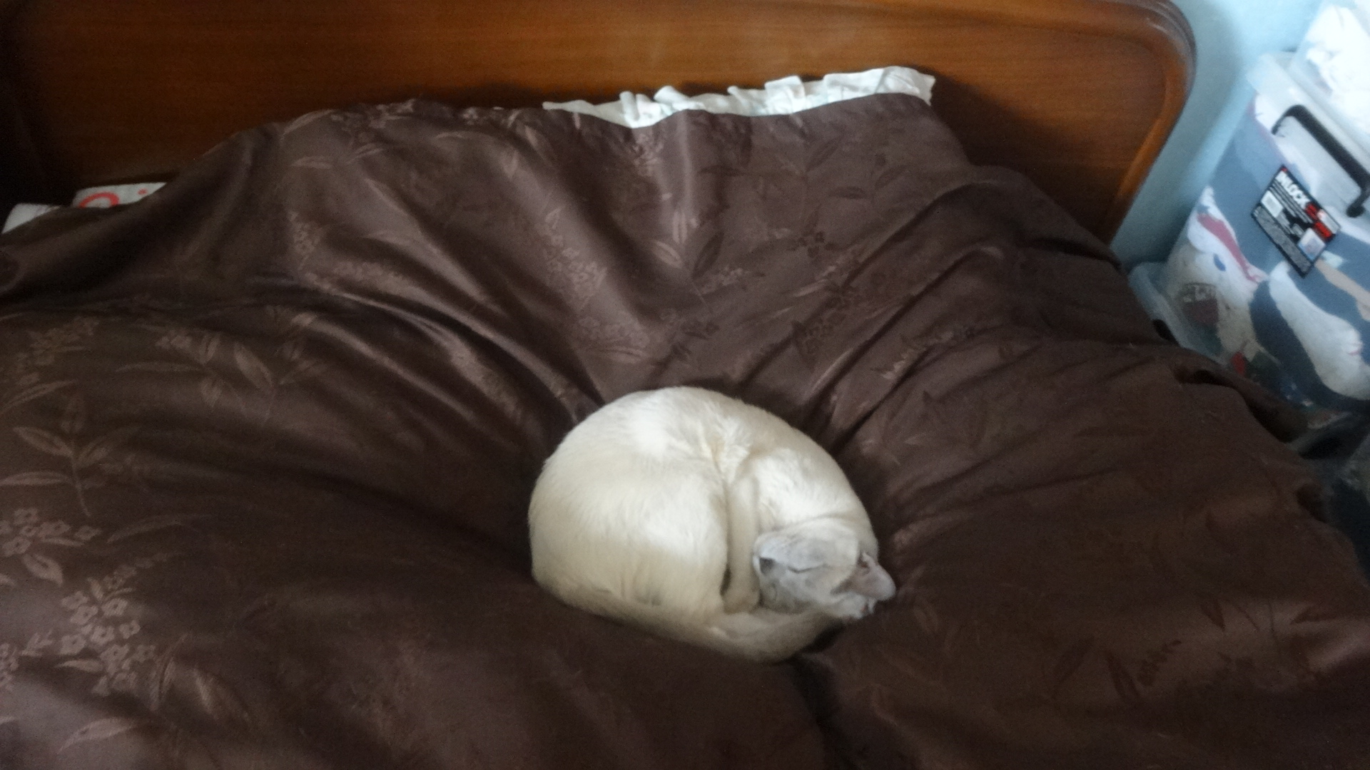 布のベッドカバーの上で丸くなって気持ち良さそうに寝る楓