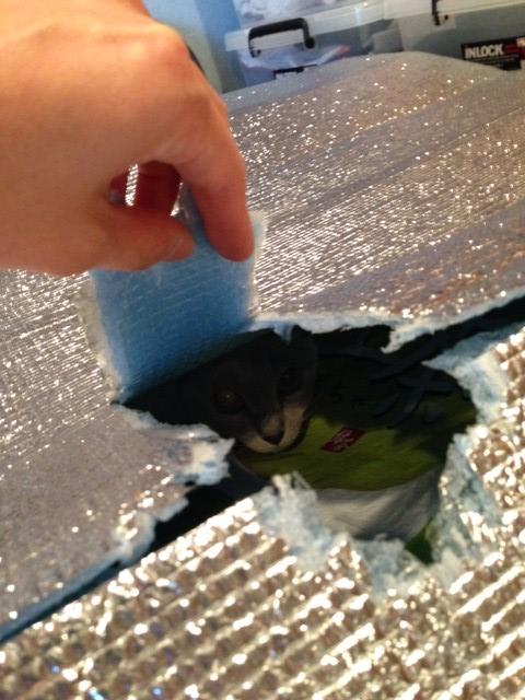 レジャーシートの下から穴越しに覗いている楓