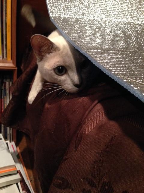 レジャーシートの下に潜り込もうとする楓