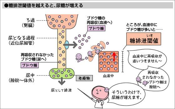 血糖値が160~180mg/dLを超えると 尿に糖がでてくることを説明した図