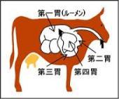 牛が持つ4つの胃袋