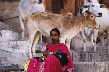 牛と赤ん坊を抱いた母親の写真
