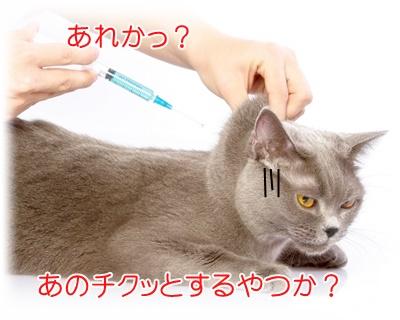 注射されるネコ