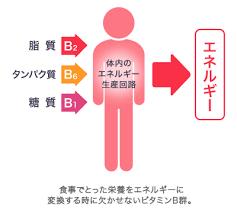 三大栄養素の さまざまな代謝反応に関わることを示す図