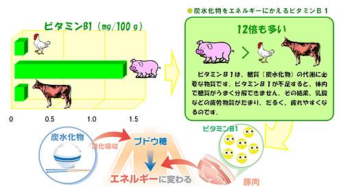 豚肉はビタミンB1が豊富なことを示す図