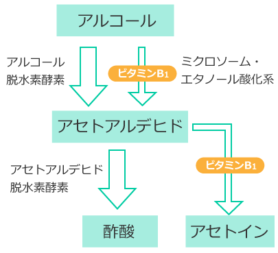 アルコール代謝のミクロソーム・エタノール酸化系に関わることを示す図2