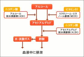 アルコール代謝のミクロソーム・エタノール酸化系に関わることを示す図