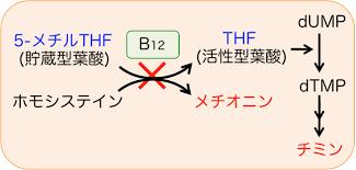葉酸のチミン合成過程を示す図