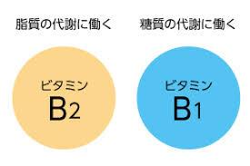 B1とB2でしっかり役割分担が出来ていることを示す図