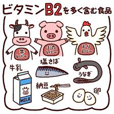 ビタミンB2を多く含む食品をまとめた図