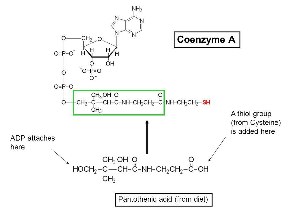 コエンザイムA CoAへの変換を示す図