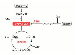 ピルビン酸をアセチルCoAに変換する過程を示した図