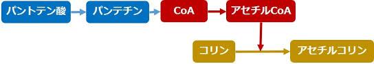 コレステロール ステロイドホルモン アセチルコリンの合成を助ける過程を示した図