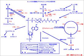 ビタミンB1 B2と協力して三大栄養素の代謝反応を促進することを示す図2