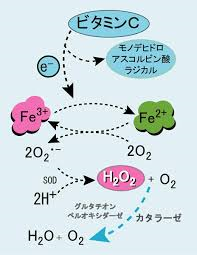 ビタミンCの作用機序