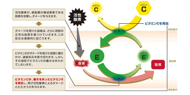 ビタミンEとビタミンCの相乗効果を示す図