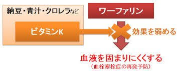 納豆に豊富なビタミンKがワーファリンの効き弱めてしまうことを示す図