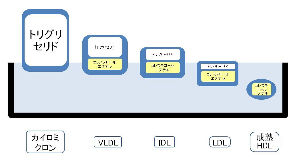 カイロミクロンとVLDLの働きの図示