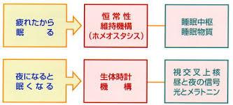 体内時計 恒常性維持機構(ホメオスタシス) の2本立てについて説明した図