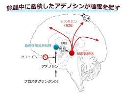 プロスタグランジンD2・アデノシン系が睡眠を促すことを説明する図
