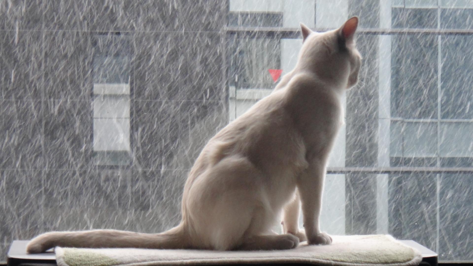 部屋の窓際から優雅に眺めている楓
