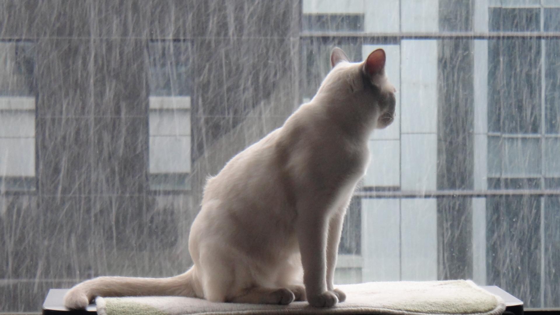飽きずに外を見る楓
