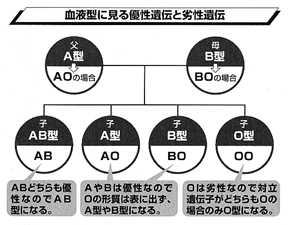 血液型の優勢 劣勢遺伝を示す図
