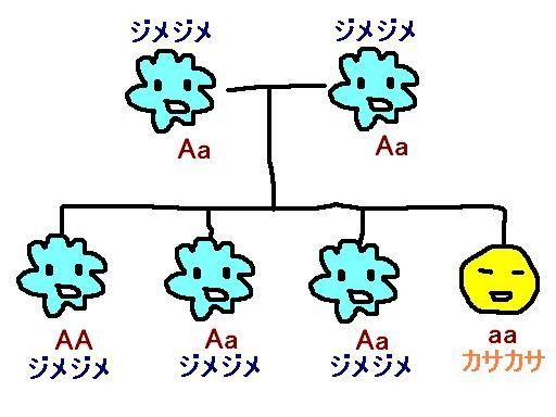 ジメジメ遺伝子の優性 劣性を説明する図