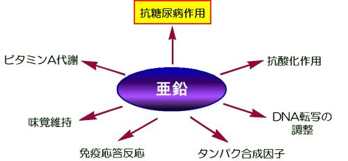 亜鉛の不足が糖尿病発症に関わることを示す図