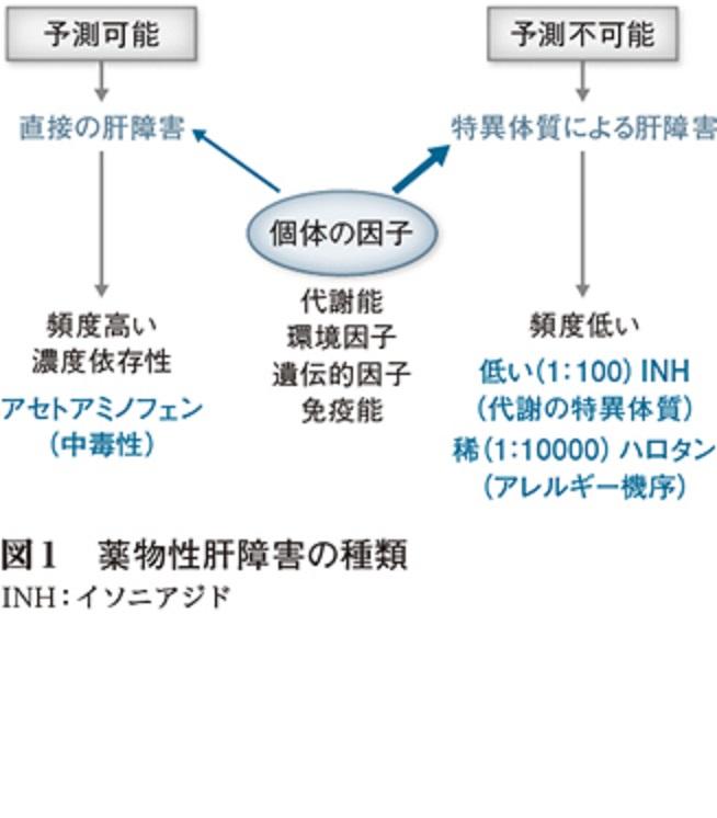 中毒性薬物性肝障害の解説図