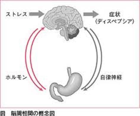消化管の運動障害が脳へのストレスで生じることを説明した図