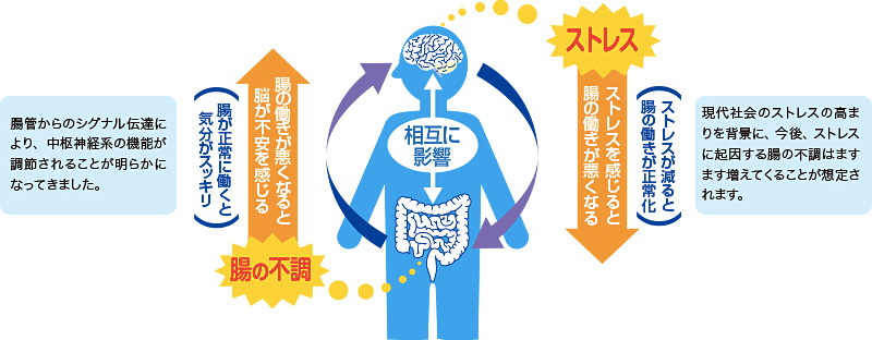 ストレスで胃が痛くなる機序の説明図