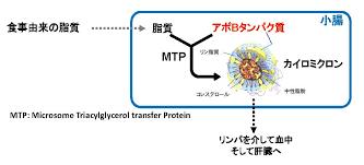カイロミクロンの構造図